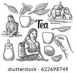 female tea pickers harvesting...   Shutterstock .eps vector #622698749