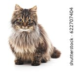 Stock photo beautiful cat isolated on a white background 622707404