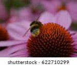 Bumblebee On A Pink Flower....