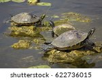 Three Red Bellied Cooter...