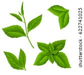 Fresh Green Tea Sprig And Mint...