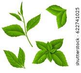 Fresh Green Tea Sprig And Mint...