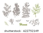 medicinal plants vector set.... | Shutterstock .eps vector #622752149