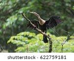 anhinga with openwings  anhinga ...   Shutterstock . vector #622759181