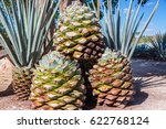 Stack Of Blue Agave Pineapples...