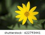 Yellow Helianthus Tuberosus...
