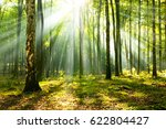 beautiful morning in the forest | Shutterstock . vector #622804427