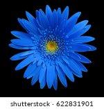 blue gerbera flower on black...   Shutterstock . vector #622831901