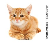 Stock photo cute little red kitten isolated on white 62293849