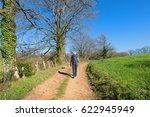 Stock photo man and dog walking in nature 622945949