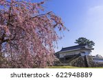 cherry blosoms in odawara... | Shutterstock . vector #622948889