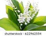 Strands Of Lily Of The Valley...