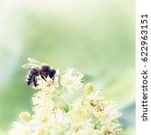 Honey Bee Pollinate Flower In...
