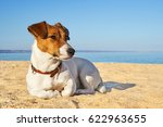 portrait of jack russell...   Shutterstock . vector #622963655