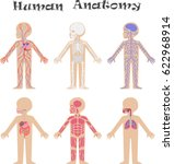 human anatomy for kids.... | Shutterstock .eps vector #622968914