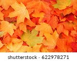 Autumn Maple Leaves As...