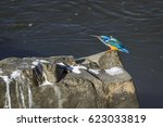 Small photo of Half-collared kingfisher in Kruger national park, South Africa ; Specie Alcedo semitorquata family of Alcedinidae