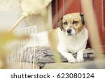 calm dog securing home | Shutterstock . vector #623080124