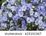 Shrub Of Violet Flowers Violet...