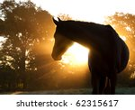 Stock photo beautiful arabian horse silhouette against morning sun shining through haze and trees 62315617
