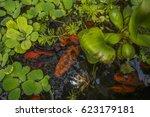 Beautiful Red Fish Swimming In...