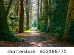 Small photo of Forest road landscape