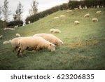 new zealand sheep in the green... | Shutterstock . vector #623206835