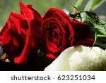 red and white roses sprinkled... | Shutterstock . vector #623251034