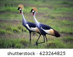 Two Grey Crowned Crane In...