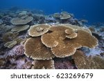 tropical reef seascape with... | Shutterstock . vector #623269679
