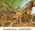 Small photo of Exposed Tree Roots