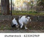 Small photo of fraidy cat