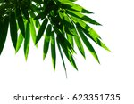 bamboo leaves isolated on white ... | Shutterstock . vector #623351735