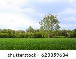 big tree on green grass | Shutterstock . vector #623359634