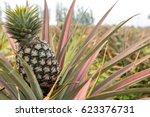 pineapple tropical fruit...   Shutterstock . vector #623376731
