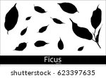 set of ficus leaves. black and... | Shutterstock .eps vector #623397635