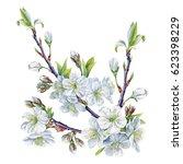 watercolor hand painted cherry... | Shutterstock . vector #623398229