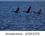 Three flying geese over blue waters of Lake Muskoka - stock photo