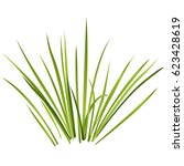 Vector Isolated Reed. Water...