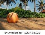 Coconut On The Beach Among Pal...