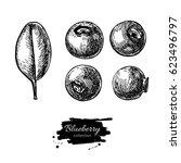 blueberry vector drawing set....   Shutterstock .eps vector #623496797