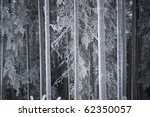 Trunks of pine trees and spruces on a cold winter day - stock photo