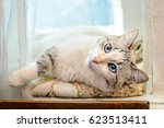 beautiful fluffy white cat with ... | Shutterstock . vector #623513411