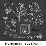 medicinal plants vector set....