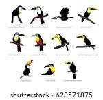 various toucan set cartoon... | Shutterstock .eps vector #623571875