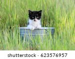 Adorable Kitten Outdoors In...