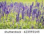 purple salvia in autumn. | Shutterstock . vector #623593145