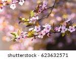 Spring Flowers. Beautifully...