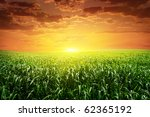 sunset and field with green... | Shutterstock . vector #62365192