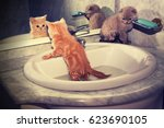 Stock photo two little kittens bathing in the sink red kitten looking at mirror on reflection 623690105